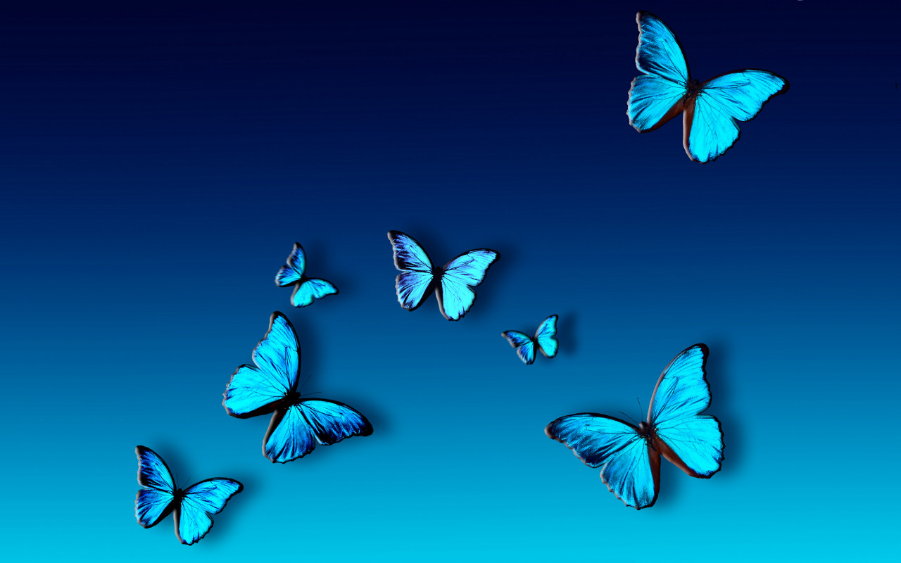 blue butterfly group - photo #6