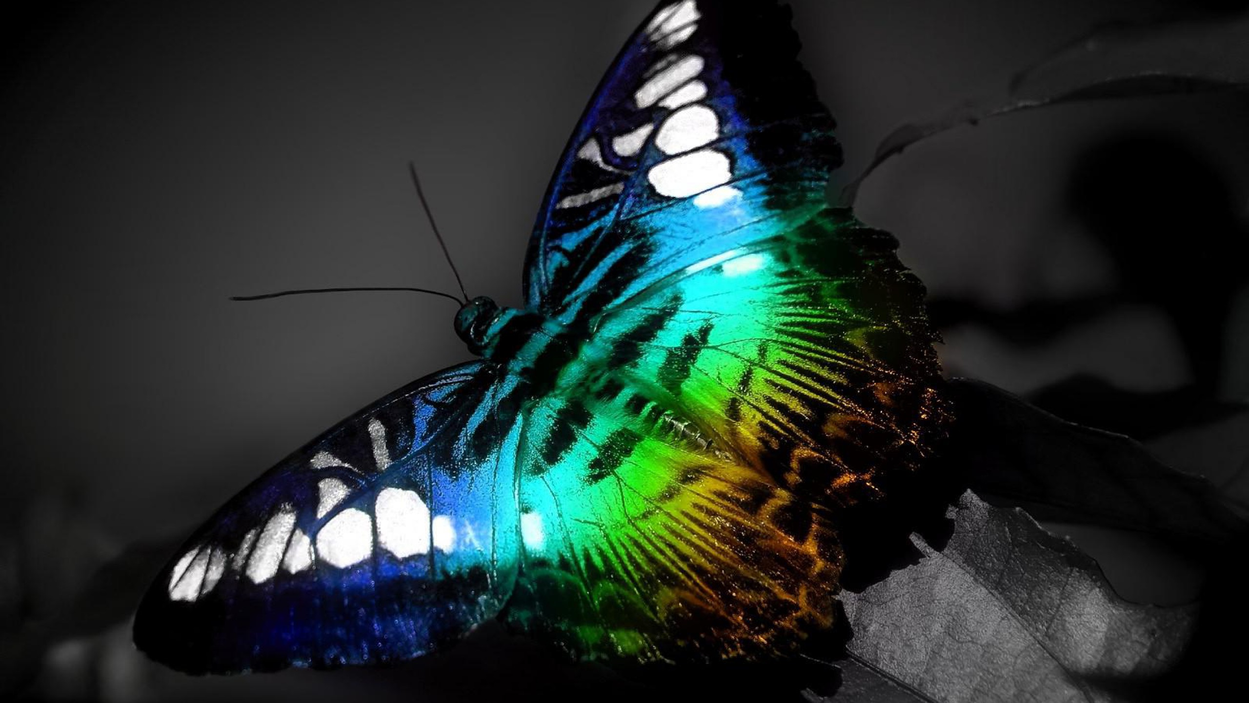 Beautiful Butterfly Wallpapers Group 2560x1440