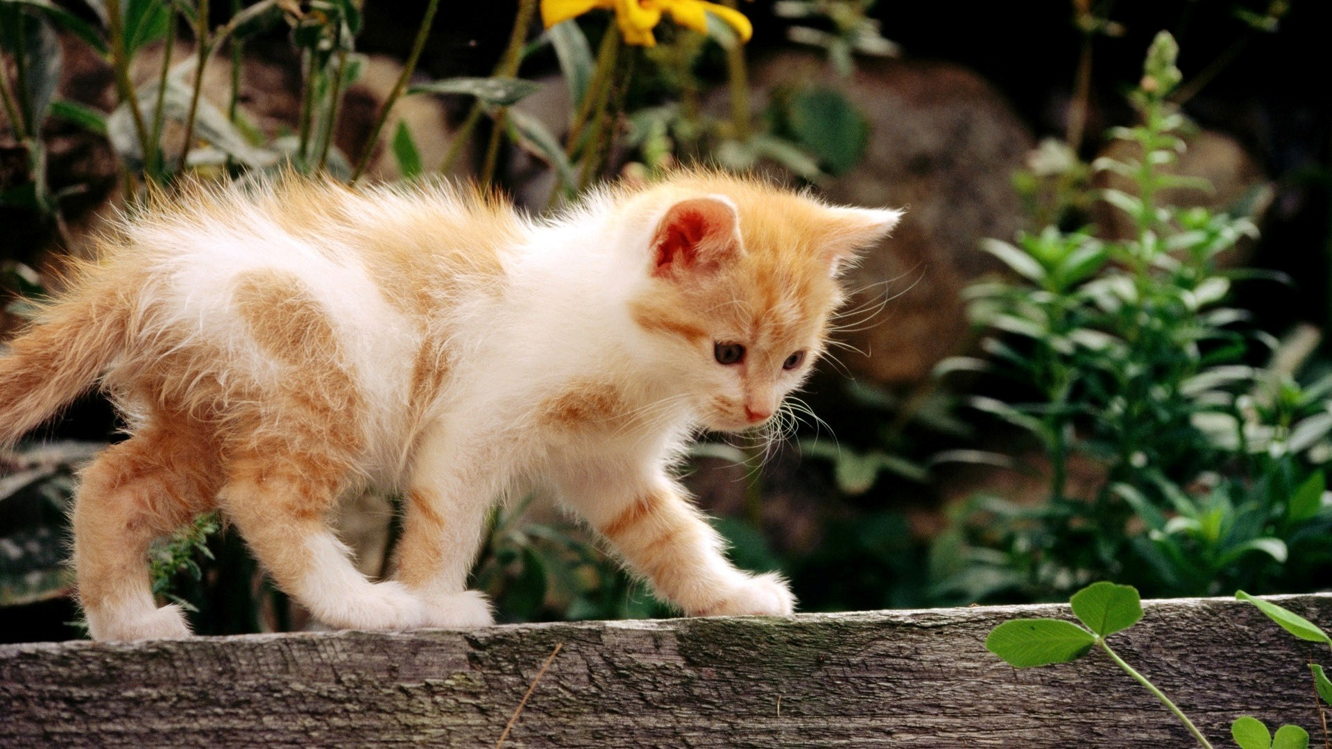 beautiful cat wallpapers hd pictures one hd wallpaper pictures 1920x1080