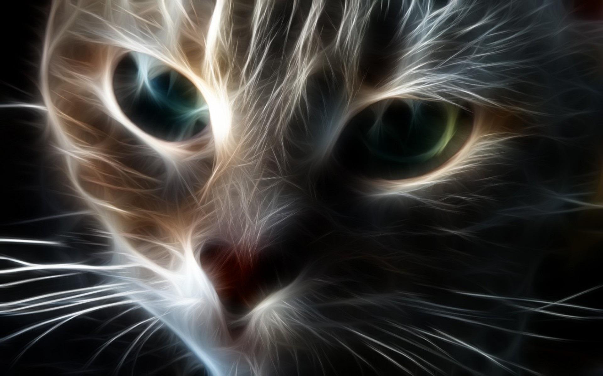 Yang Cat Hd Desktop Wallpaper Widescreen High Definition