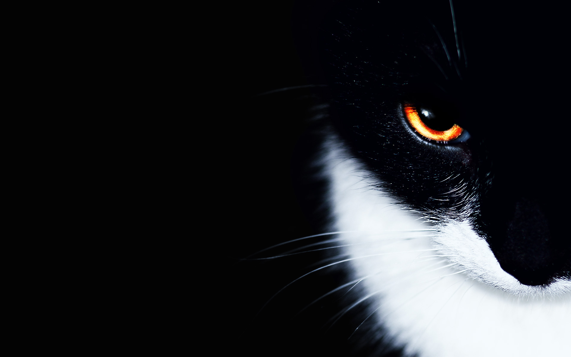 cat hd wallpapers backgrounds wallpaper 1920x1200