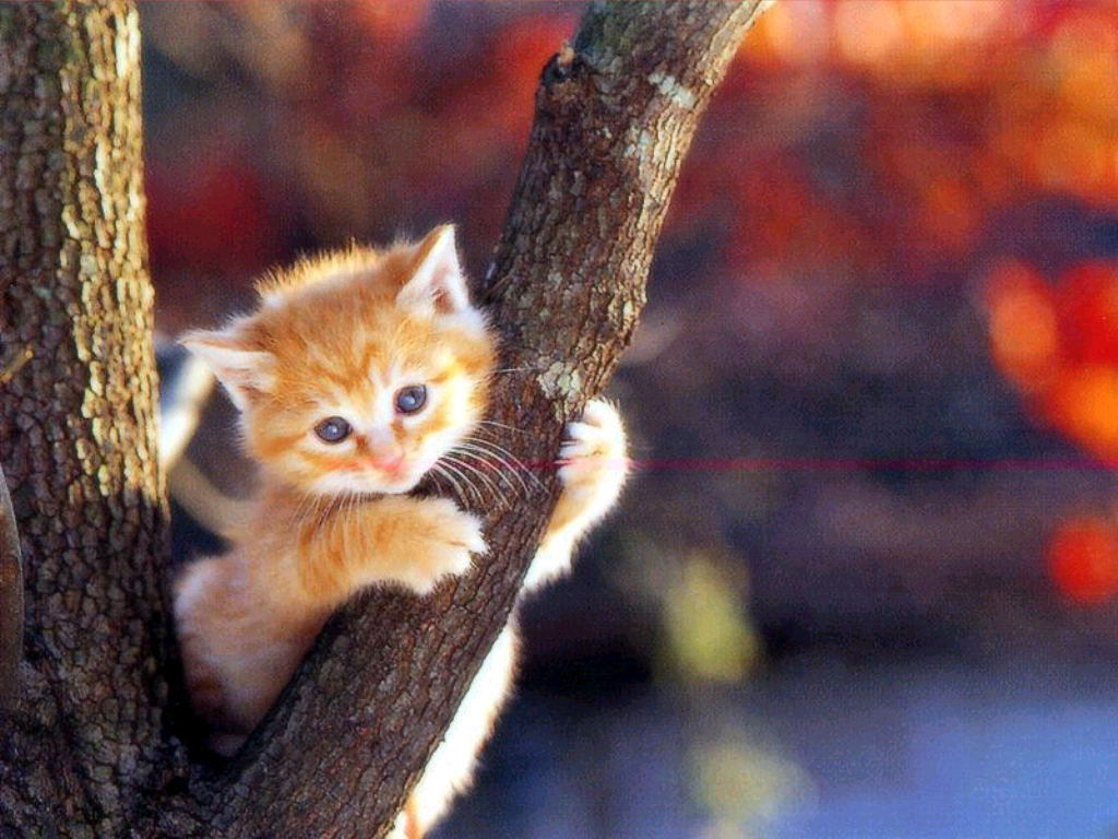 Lovely Cat HD Wallpapers Free Pictures Download  HD Wallpapers 1024x768