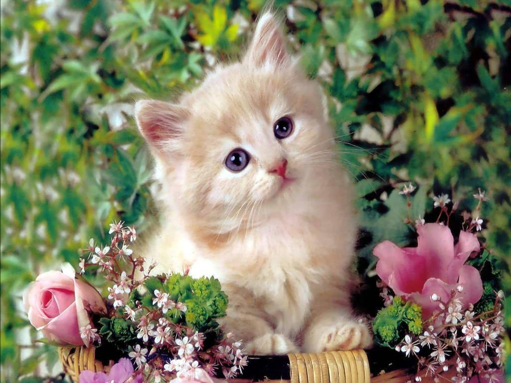 Free HD Cat Wallpapers 1024x768