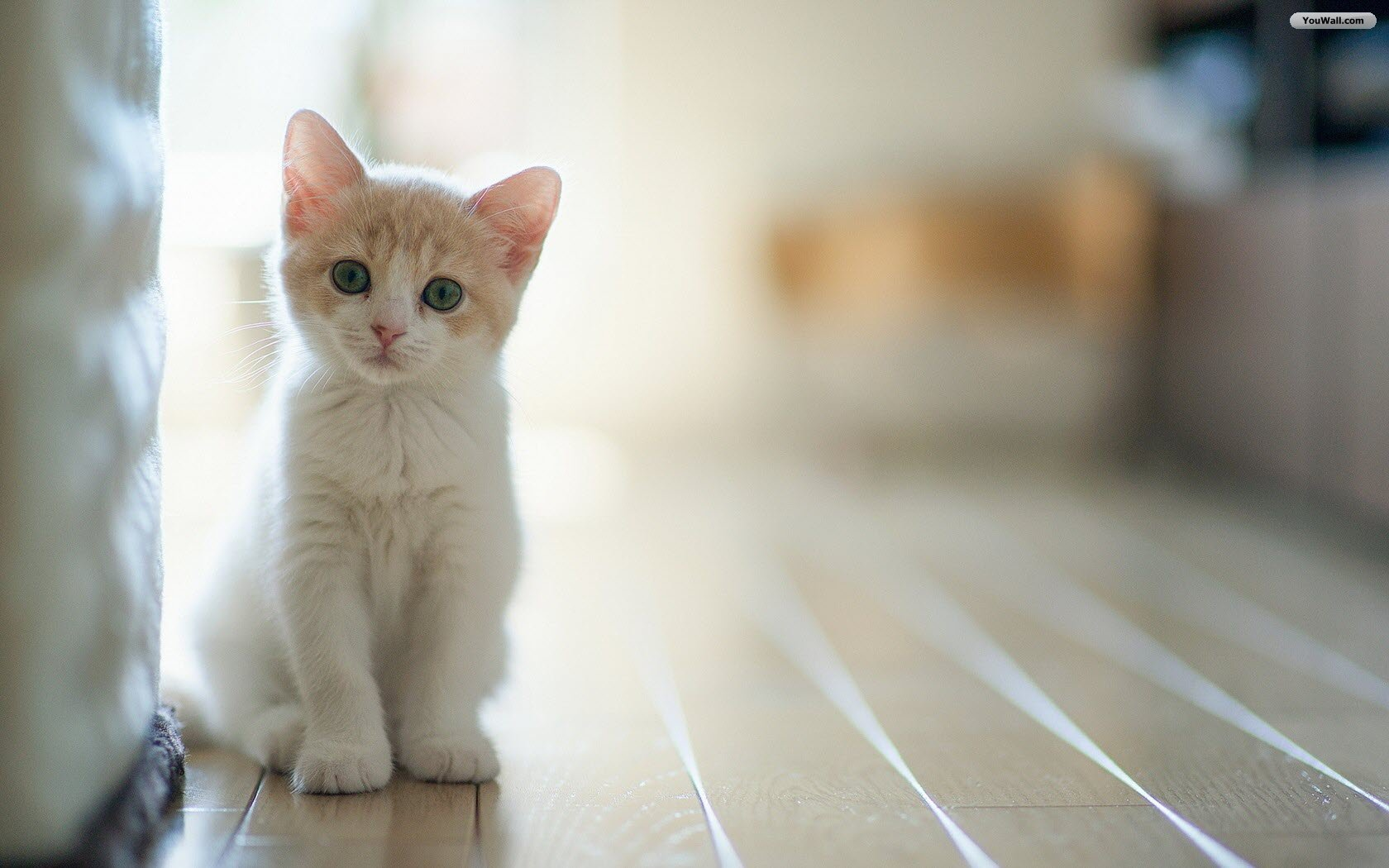 Cute Cat Wallpapers  Android Apps on Google Play 1680x1050