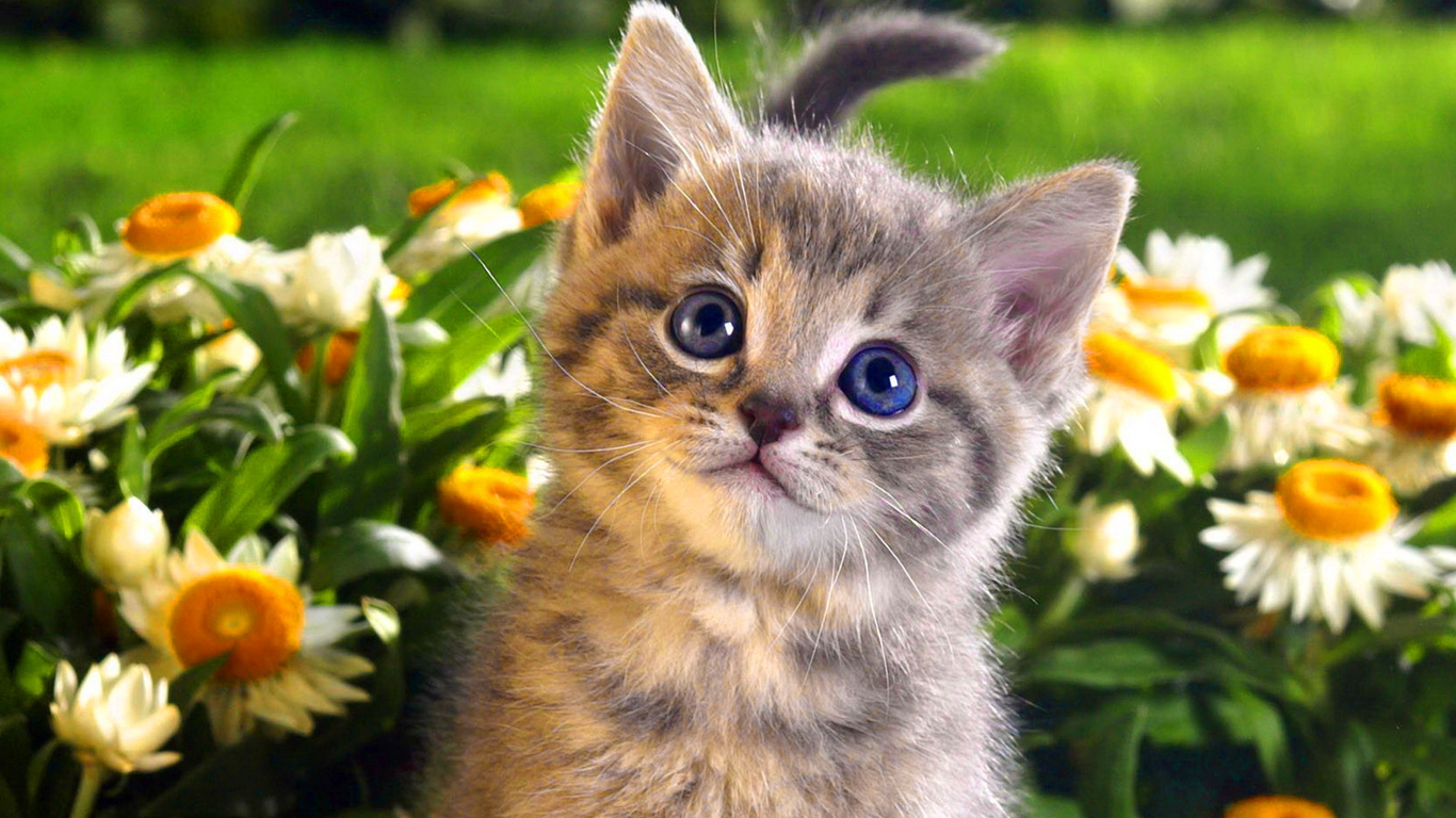 Cats wallpapers cute cats and kittens wallpapers for iphone 1366x768 thecheapjerseys Gallery