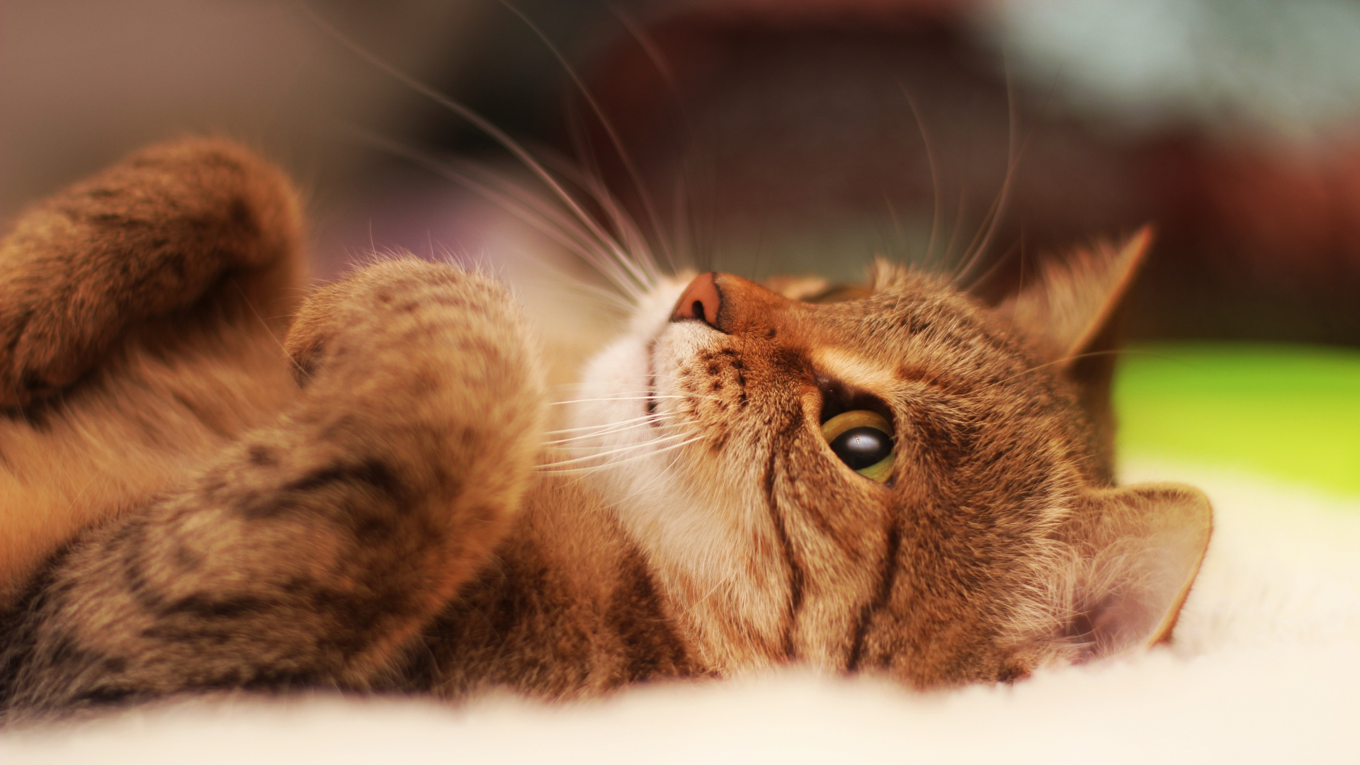 Cute Cat Wallpapers Hd Resolution Iphone For Android Tumpah 1920x1080