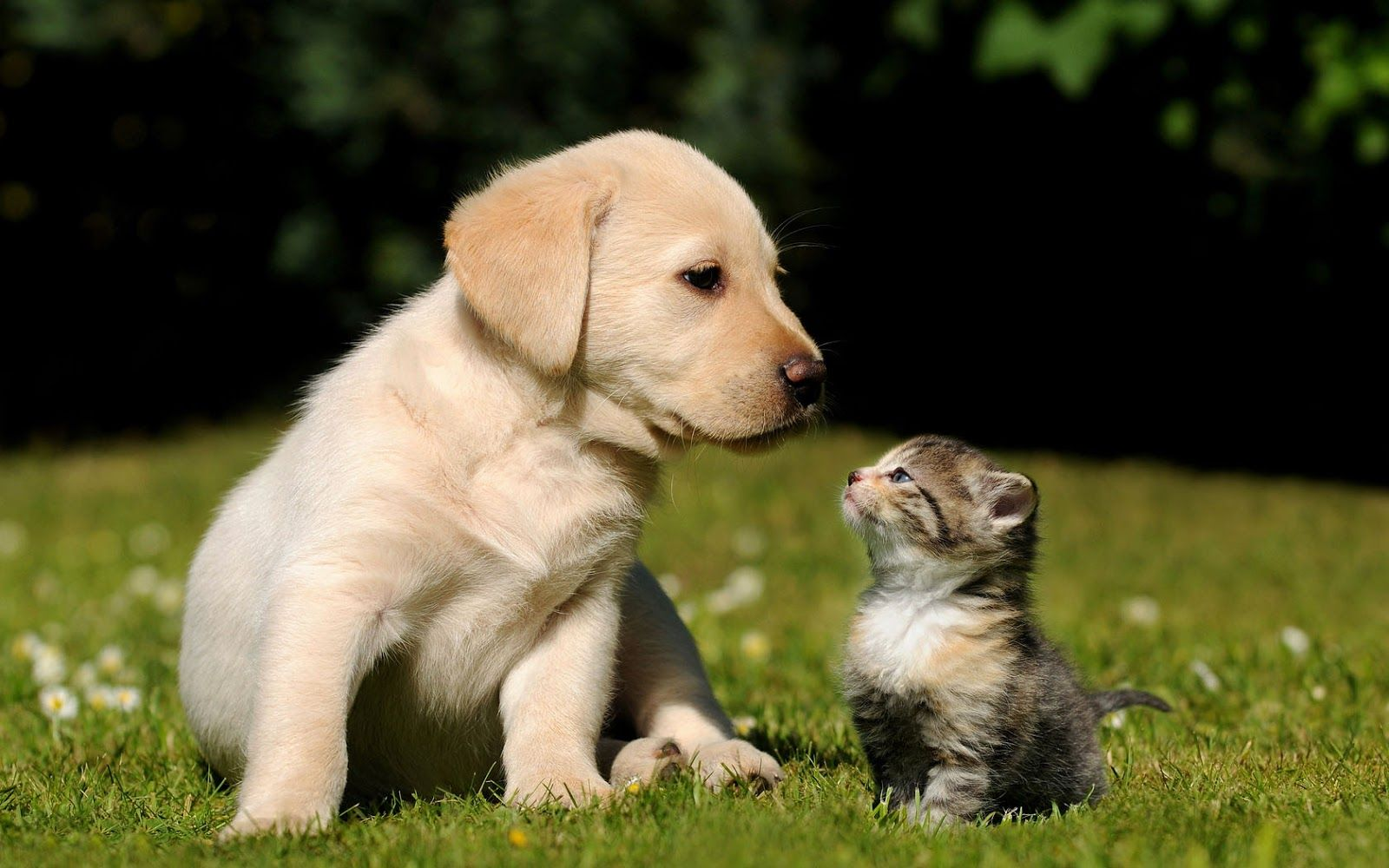 cats and dogs wallpapers pets cute and docile 1600x1000