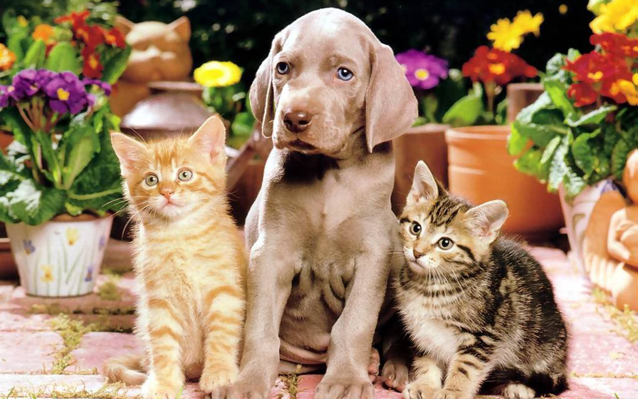 Fantastic Cute Dog N Cat Wallpapers - Cats-And-Dogs-Wallpapers-034  Image_895677 .jpg