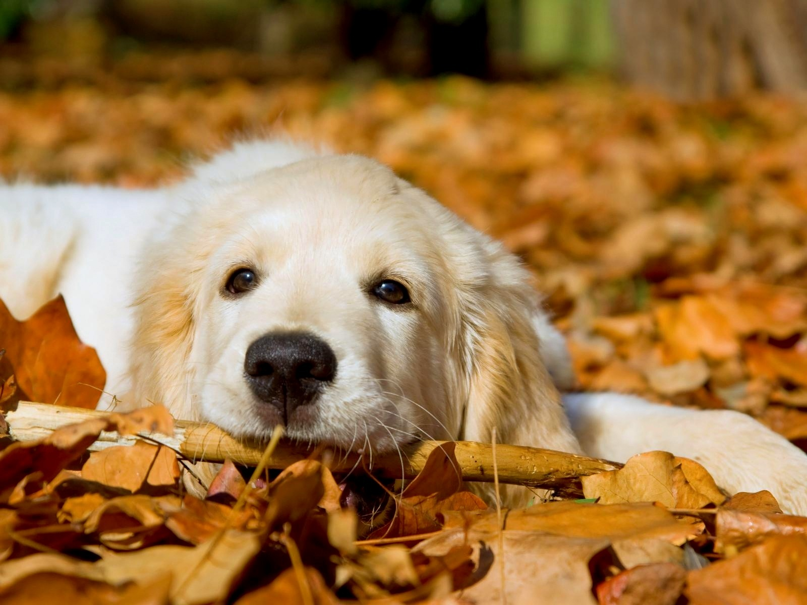 Cat And Dog Wallpapers High Quality Download Free 1600x1200