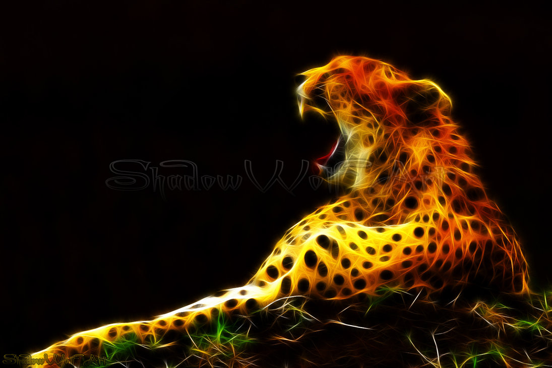 cheetah computer backgrounds best cheetah image and photo hd 2017