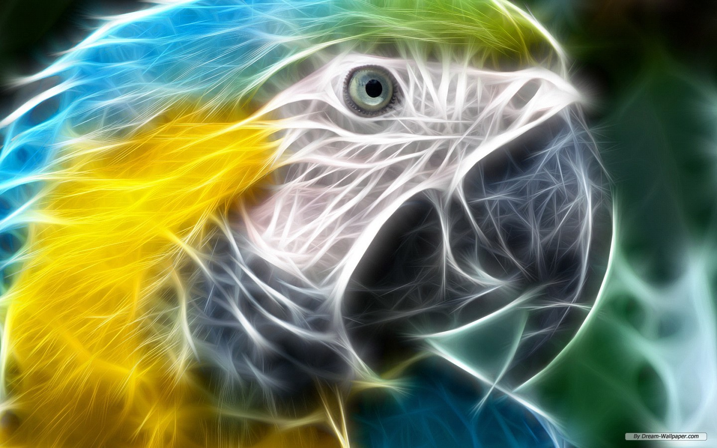Cool Animal Wallpapers  Android Apps on Google Play 1440x900