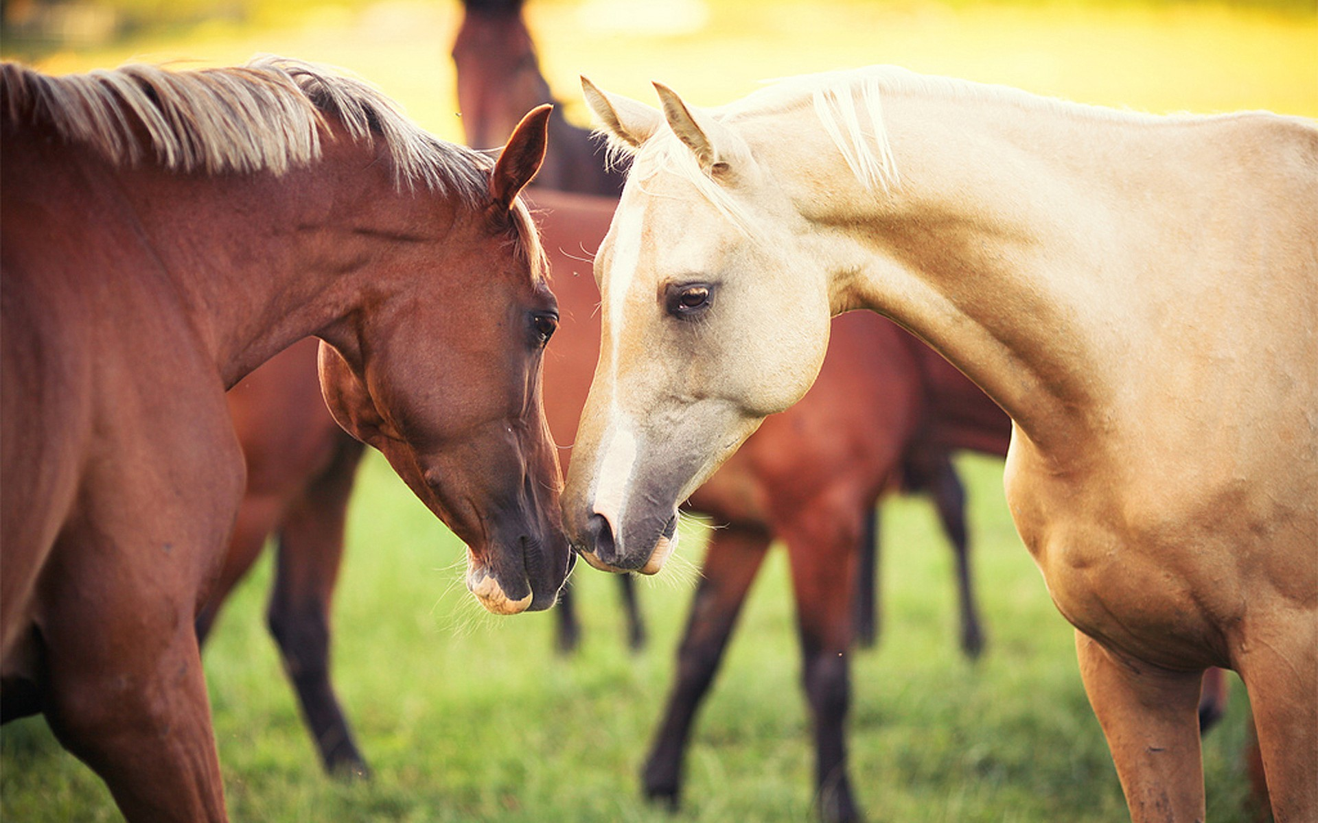 Cool Horse Wallpapers (42 Wallpapers) – Adorable Wallpapers