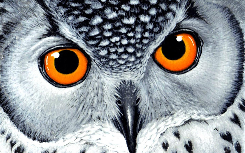 Cute Owl Wallpaper 1440x900
