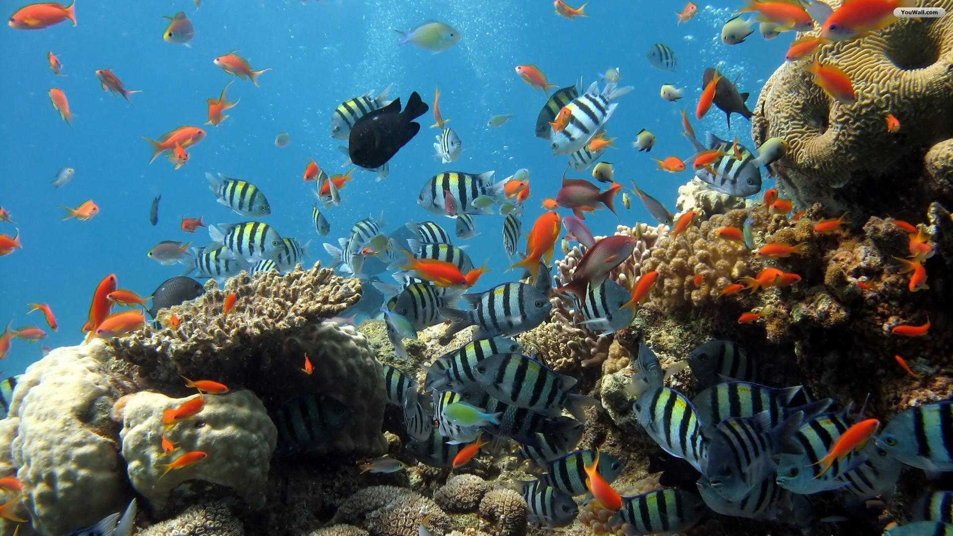 Great Barrier Reef Wallpaper 1920x1080
