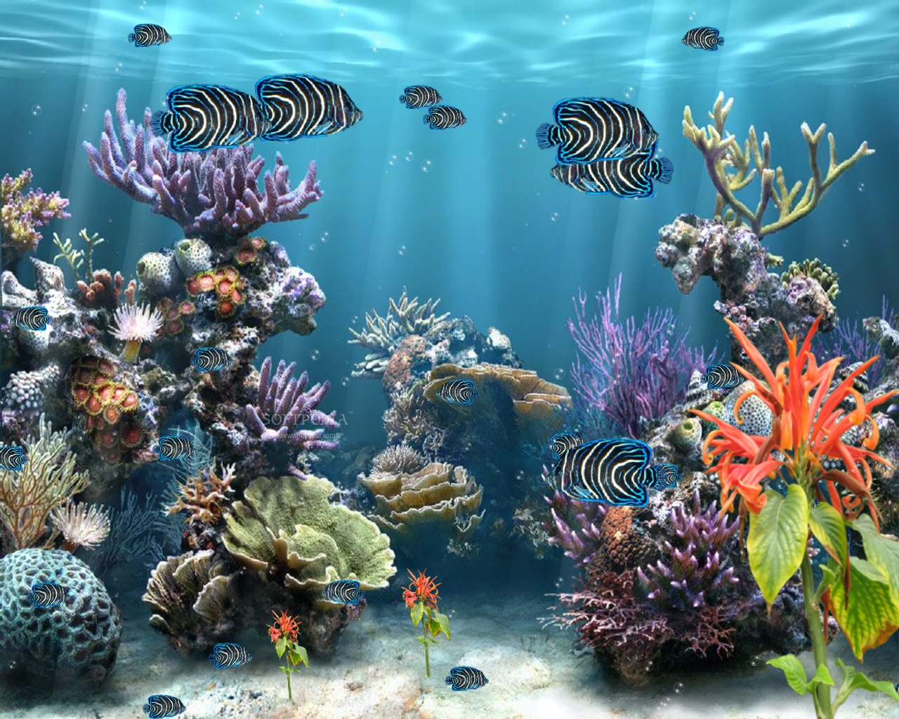 Great Barrier Reef Wallpapers Wallpaper 1280x1024