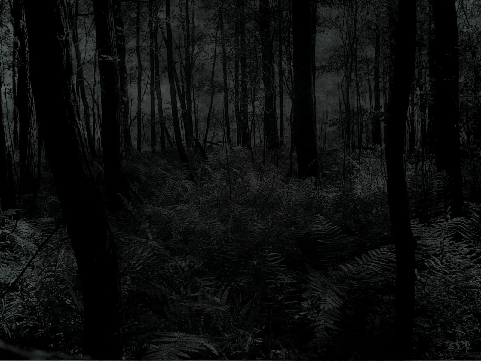 Creepy Forest Wallpaper 1600x1200