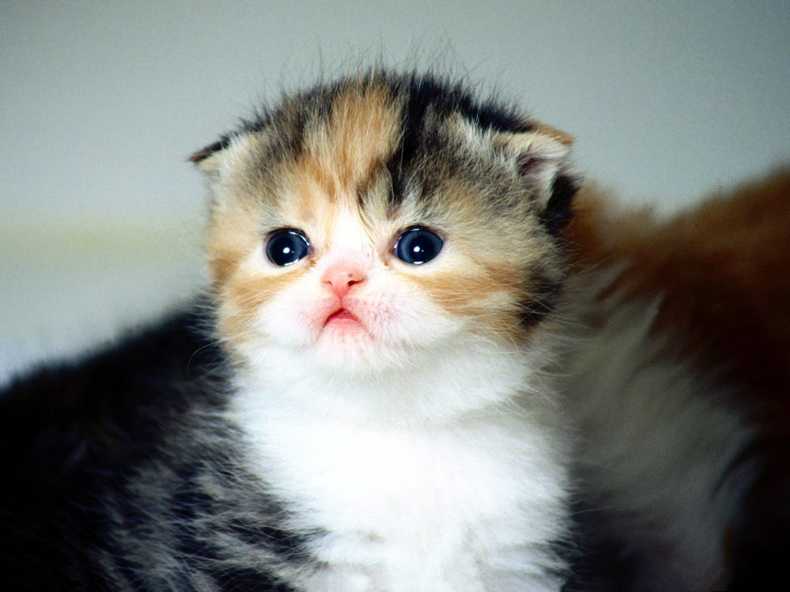 Kitty Cat Kitten Cute Baby Wild Cats Hd Cats Wallpapers Hd 1600x1200