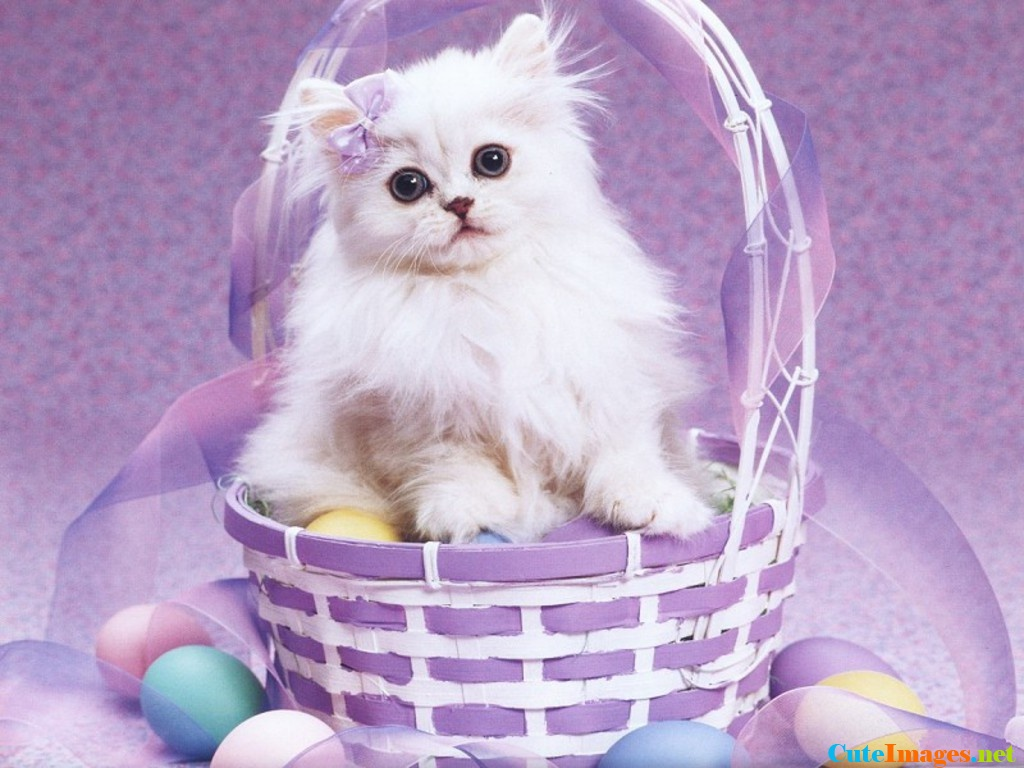 Cute Cat Wallpaper Pictures 1024x768