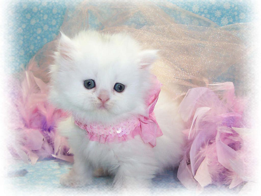 Cute Baby Cats Wallpapers Group
