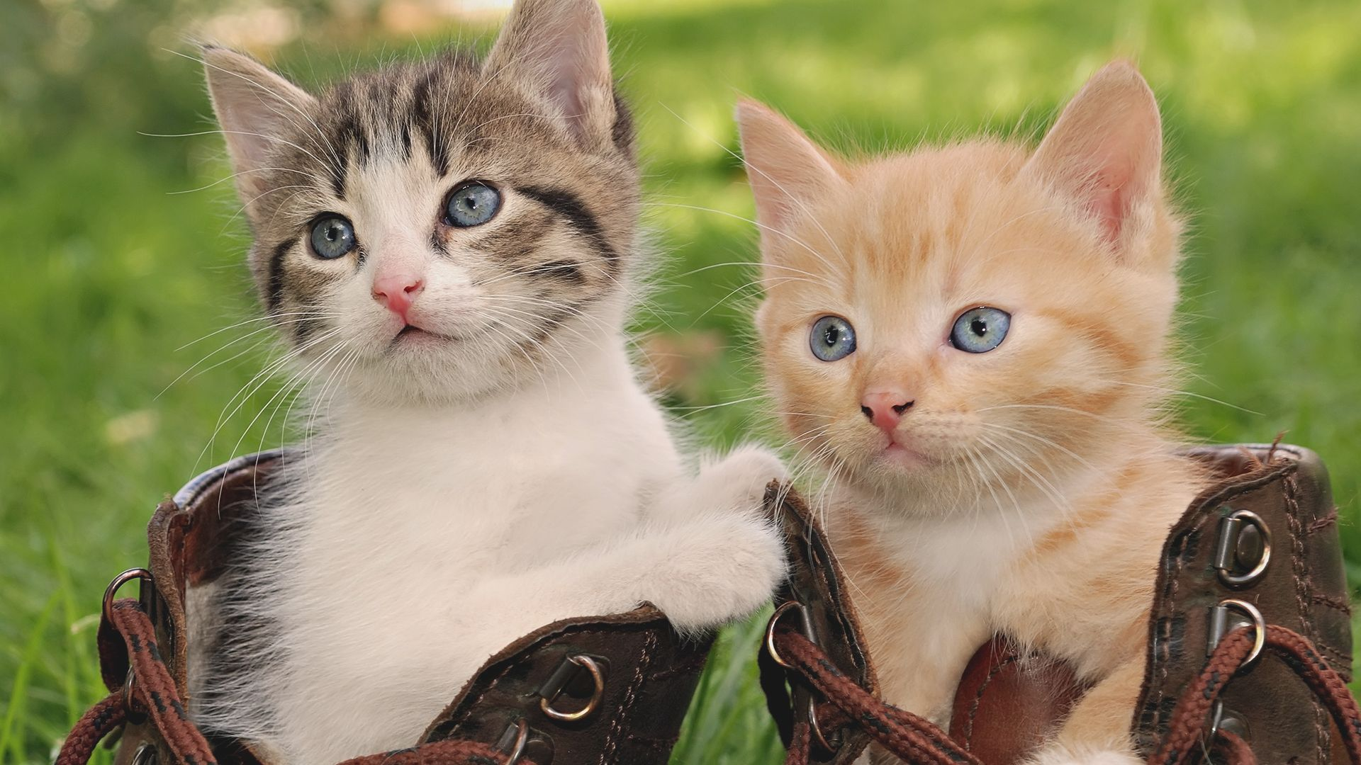 Cute Mother Cat And Baby Cat Wallpaper Downloads Beautiful 1920x1080