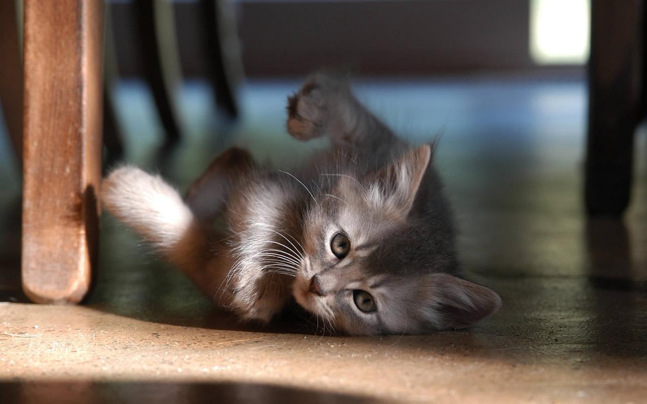 Kittens Kitten Cat Cats Baby Cute S Wallpaper 1280x800