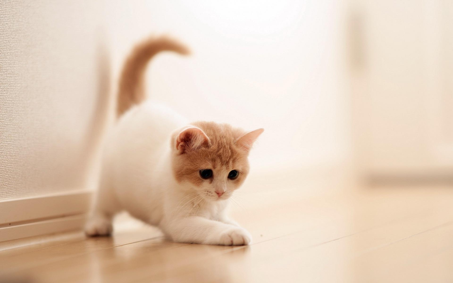 Cute Cat Backgrounds Pictures