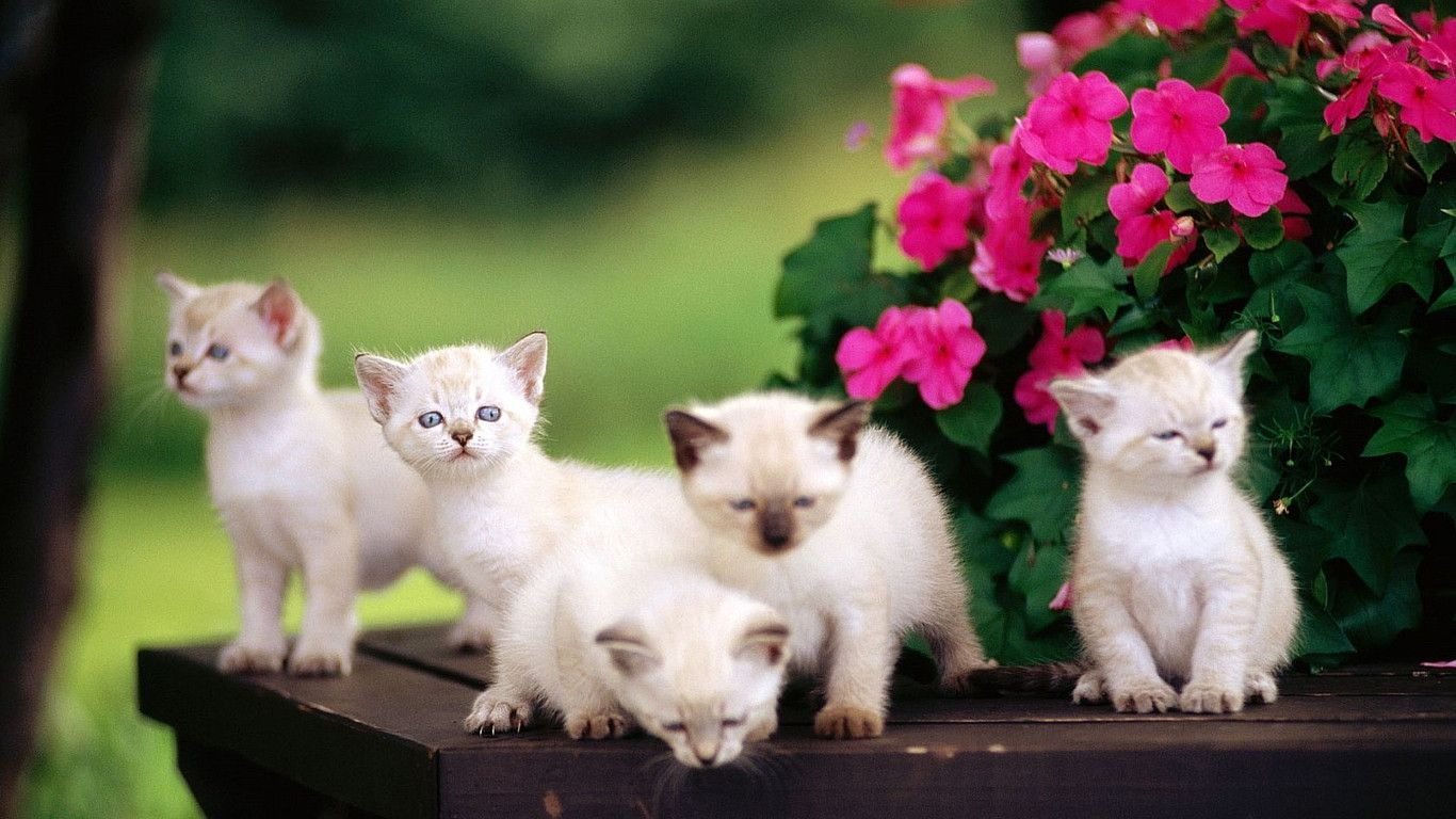 Cute Cat Images Wallpapers 46 Wallpapers Adorable Wallpapers