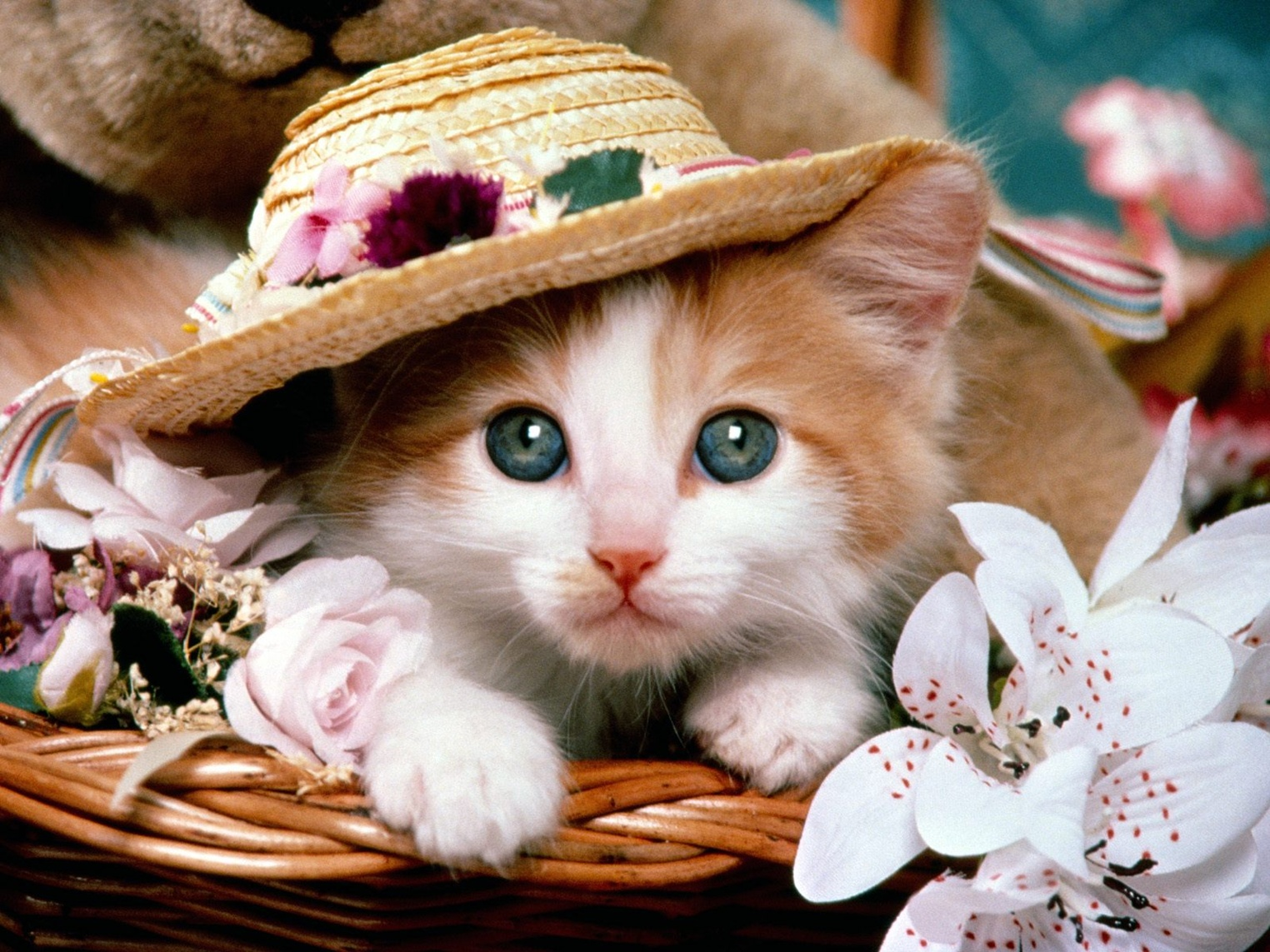 Cute Cats Wallpaper Funny Cat Dog Pictures 1524x1143