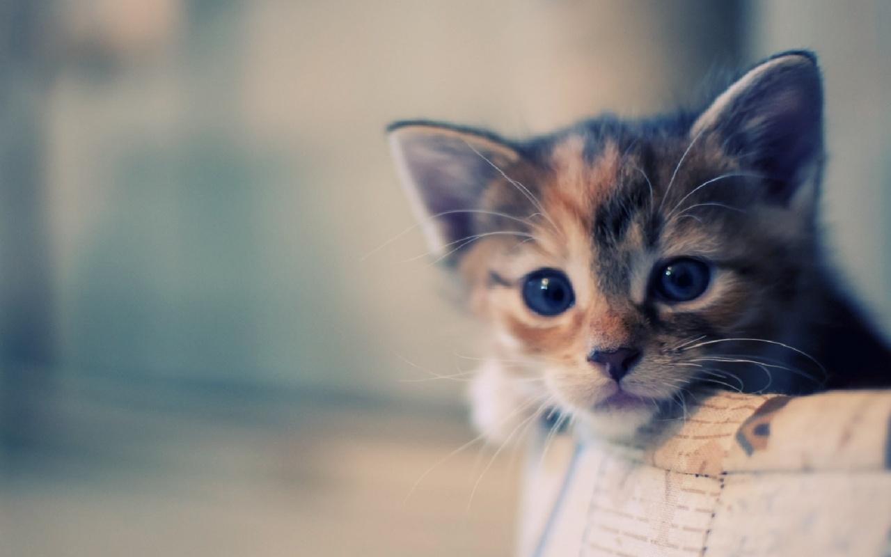 Cute Cats Kittens Wallpaper Hd Cat Themes Chrome Web Store 1280x800