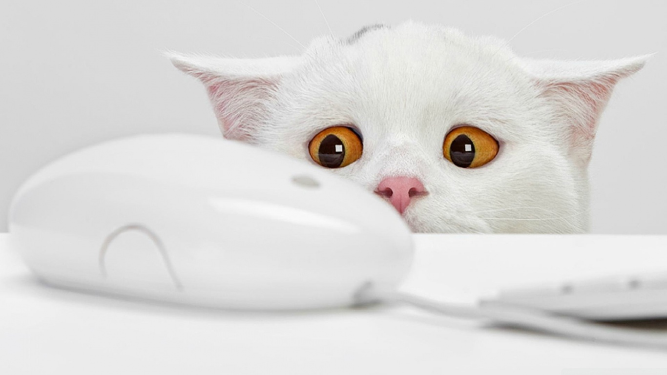Full Hd P Cute Cat Wallpaper Hd Wallpapers Images Pictures 1366x768