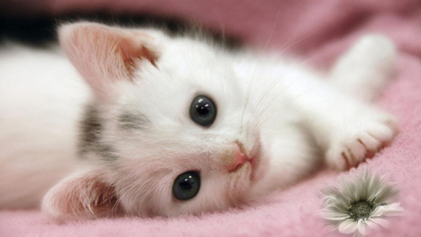 Ideas About Cute Cat Wallpaper On Pinterest Cat Phone 1366x768