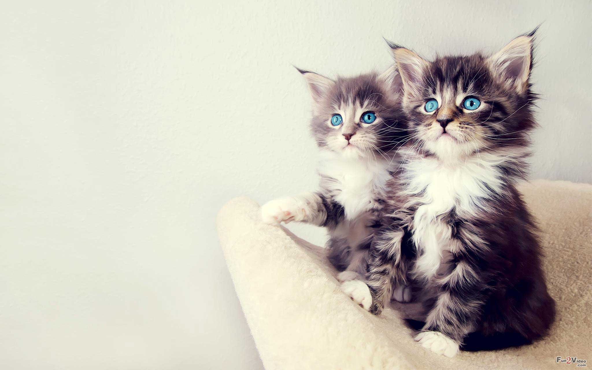 Beautiful Cute Cats Wallpapers Hd Pictures Live Hd Wallpaper 2048x1280