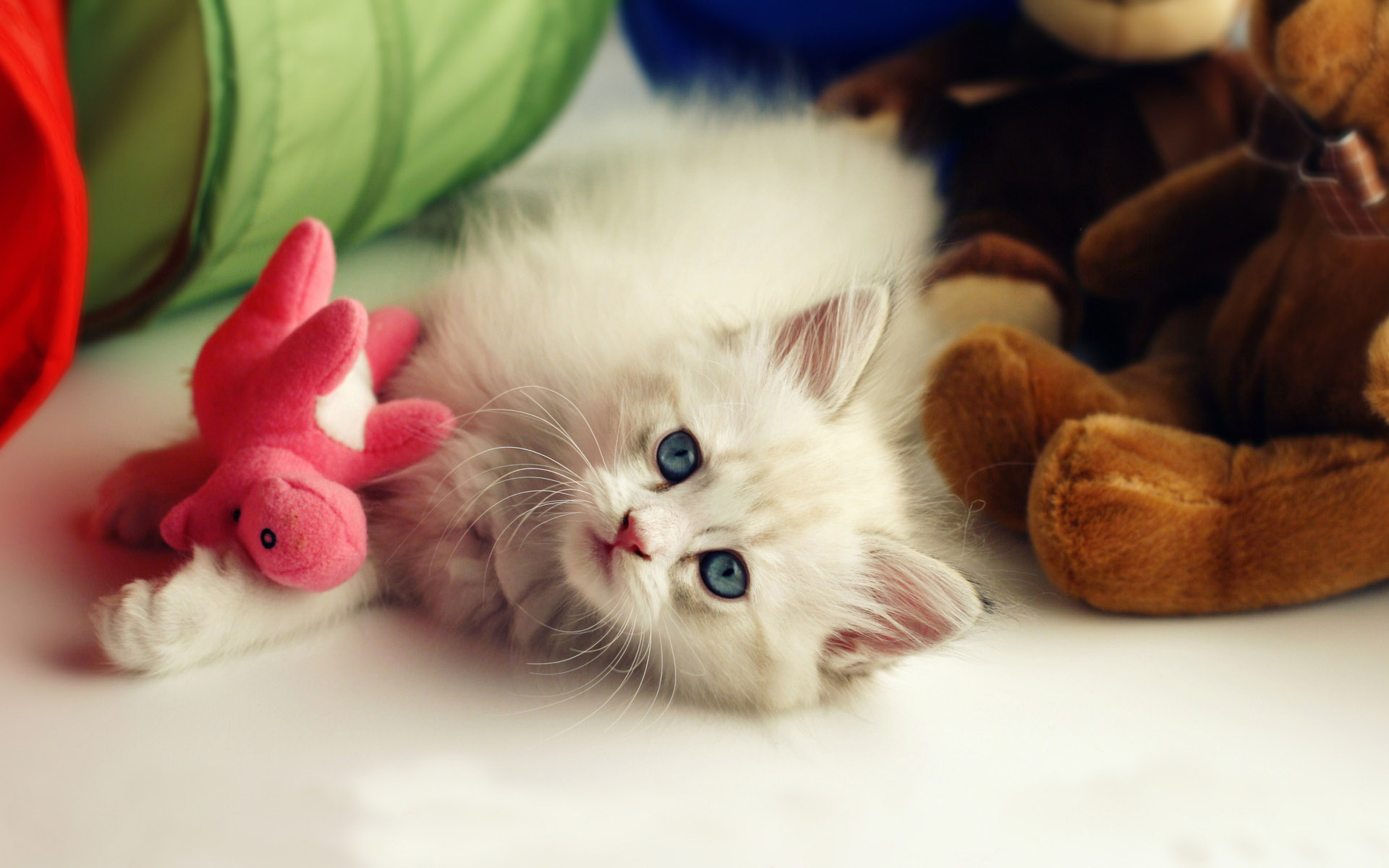 Cat Wallpapers Free Download Latest Cute Hd Animal Desktop Images 1920x1200