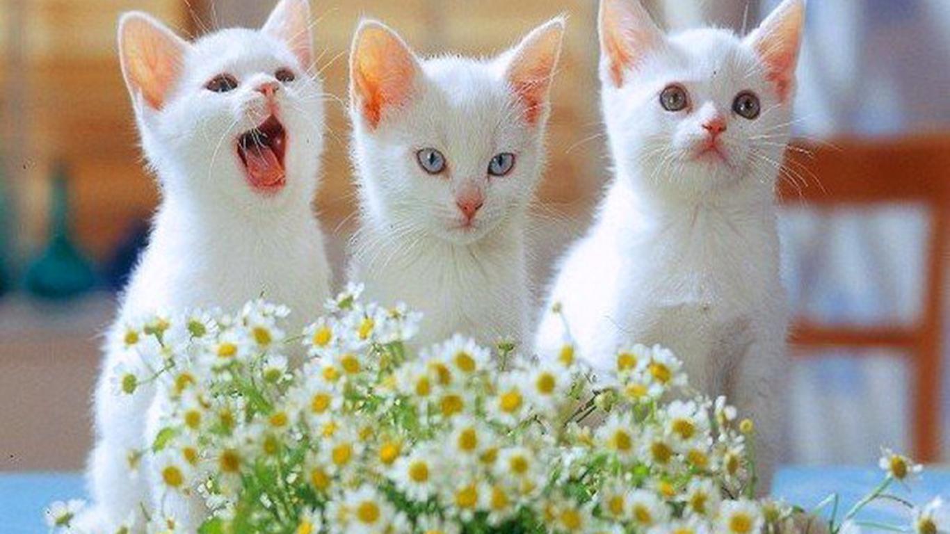 Cute Baby Cats Wallpaper 1366x768