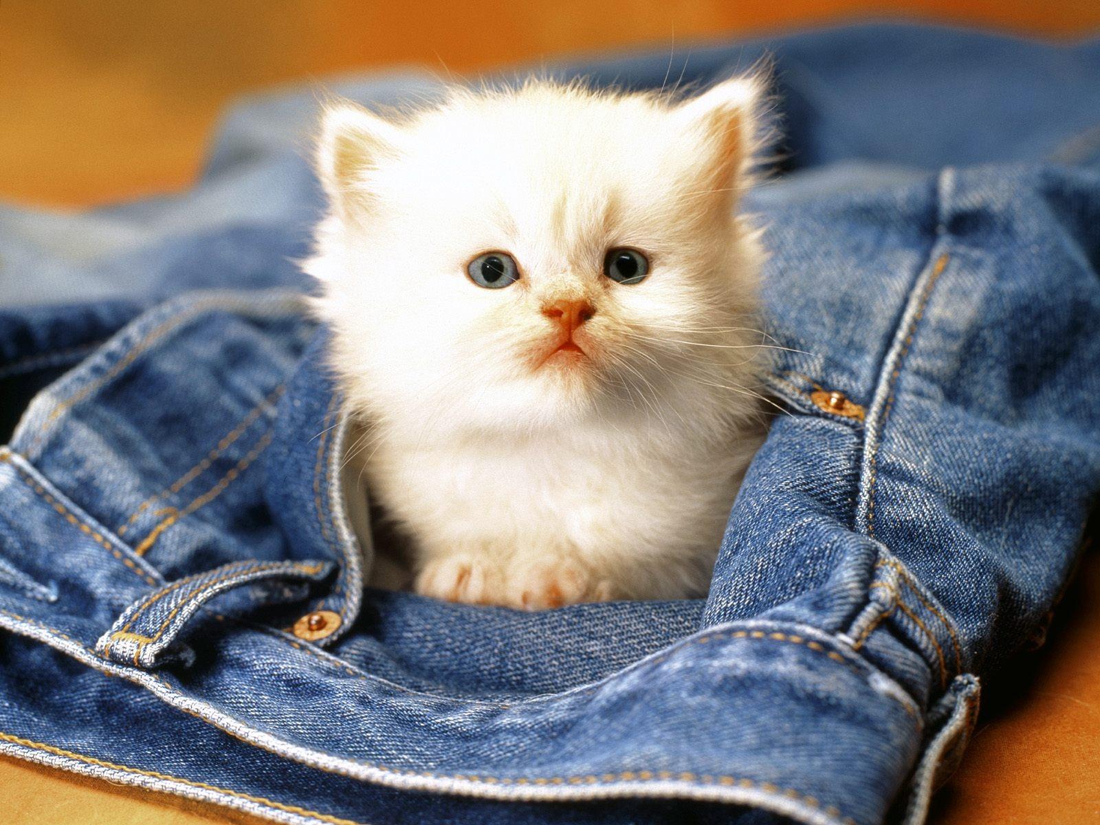Cute Baby Cats Wallpaper 1600x1200