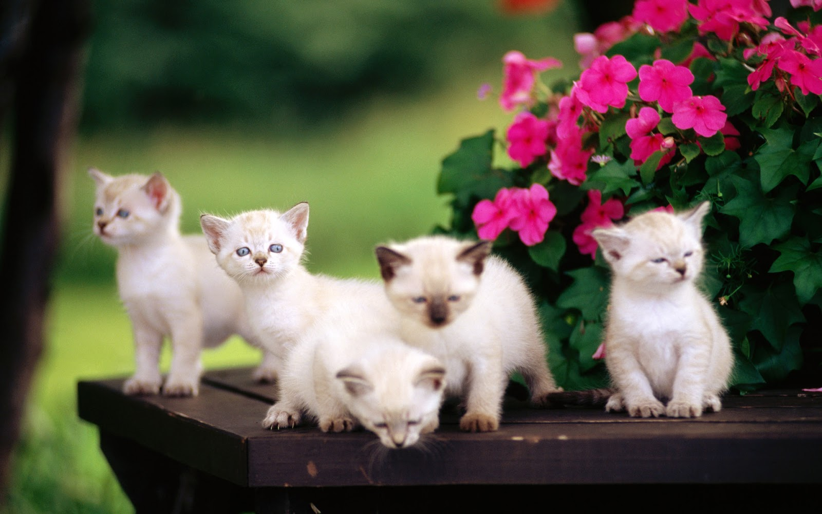 Cat Lovely Cat Images Hd Download