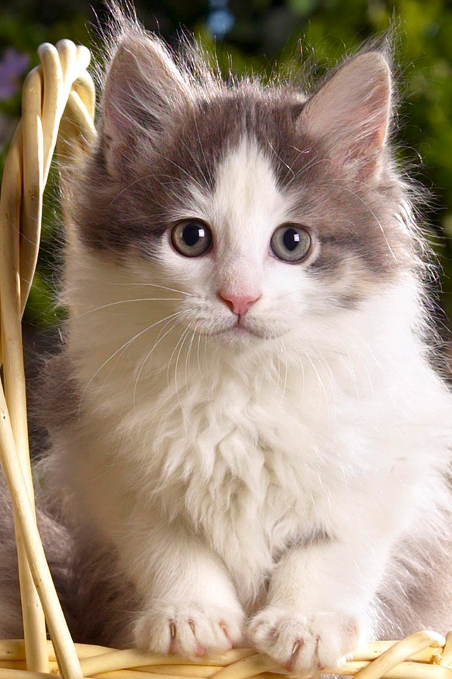 Cute Cat Wallpapers For Galaxy S Beautiful Cute Cats Wallpapers Hd Pictures Live Hd Wallpaper 640x960