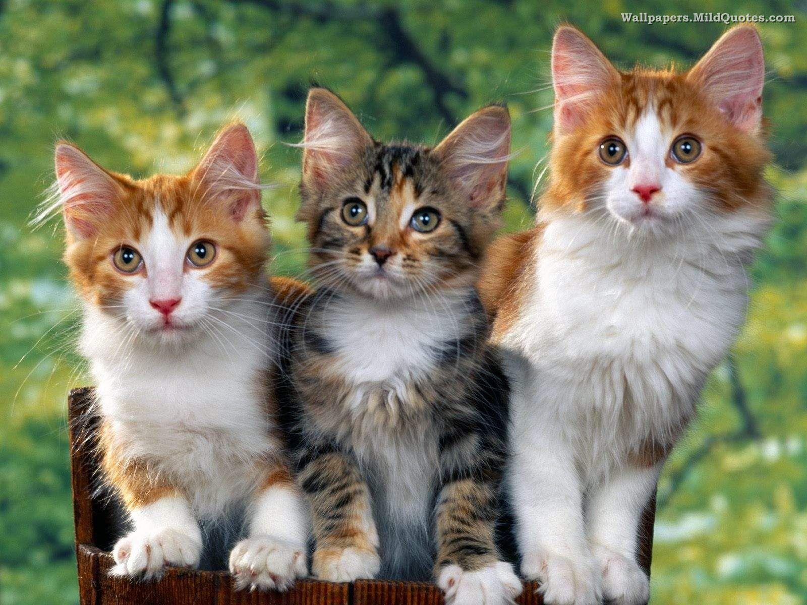 Ideas About Cute Cat Wallpaper On Pinterest Iphone 1600x1200