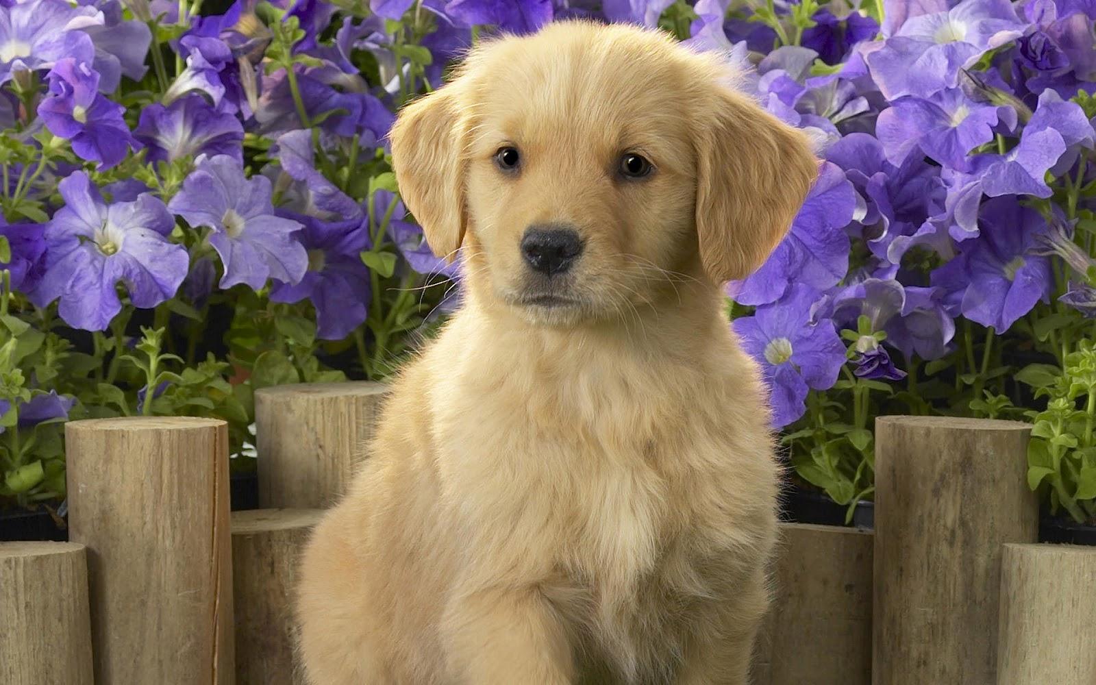 Cute Dogs Wallpapers Dog Puppy Desktop Wallpapers Hd 1600x1000