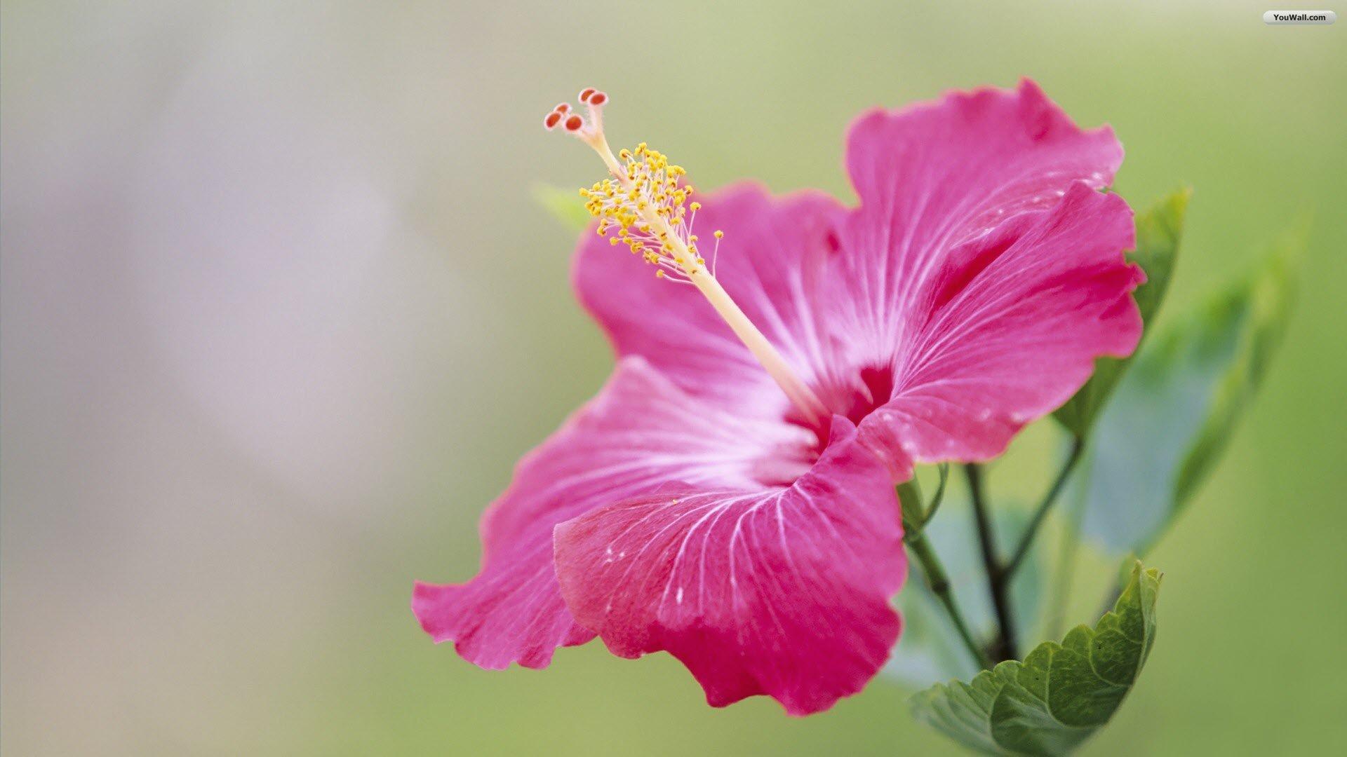 The Most Beautiful Flower Photo Amazing Photos Amazing Photo 1920x1080
