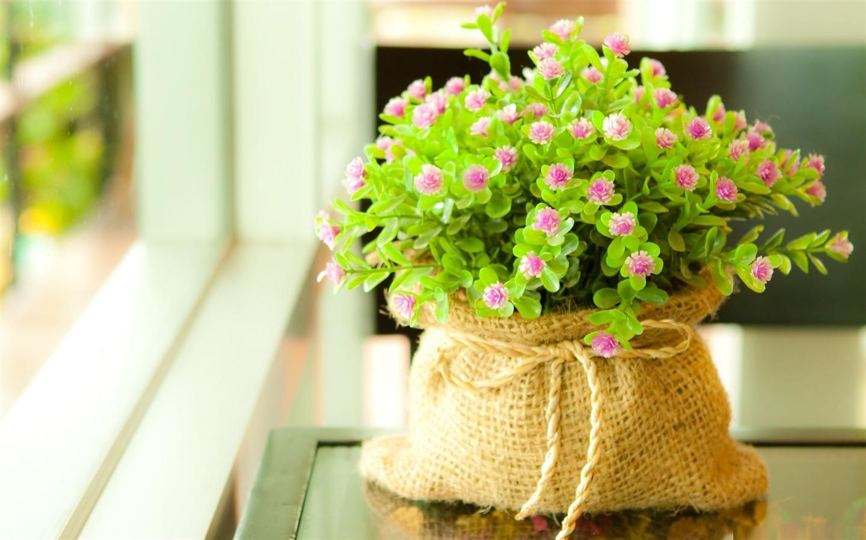 Cute flowers wallpaper wallpaper free download 1440x900 izmirmasajfo