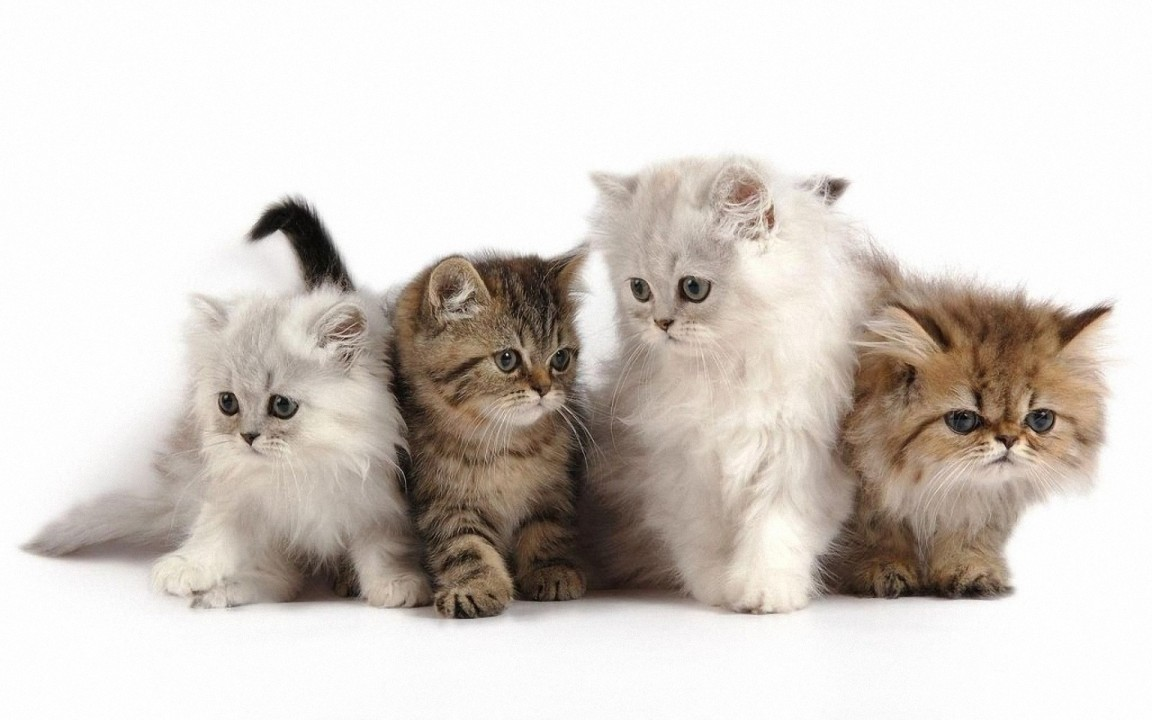 Cute Kitten Cartoon Wallpaper 1152x720