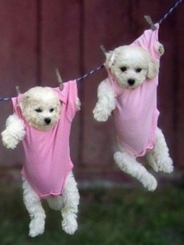Cute Puppies Wallpapers To Download Free Wallpaper Download 765x1020