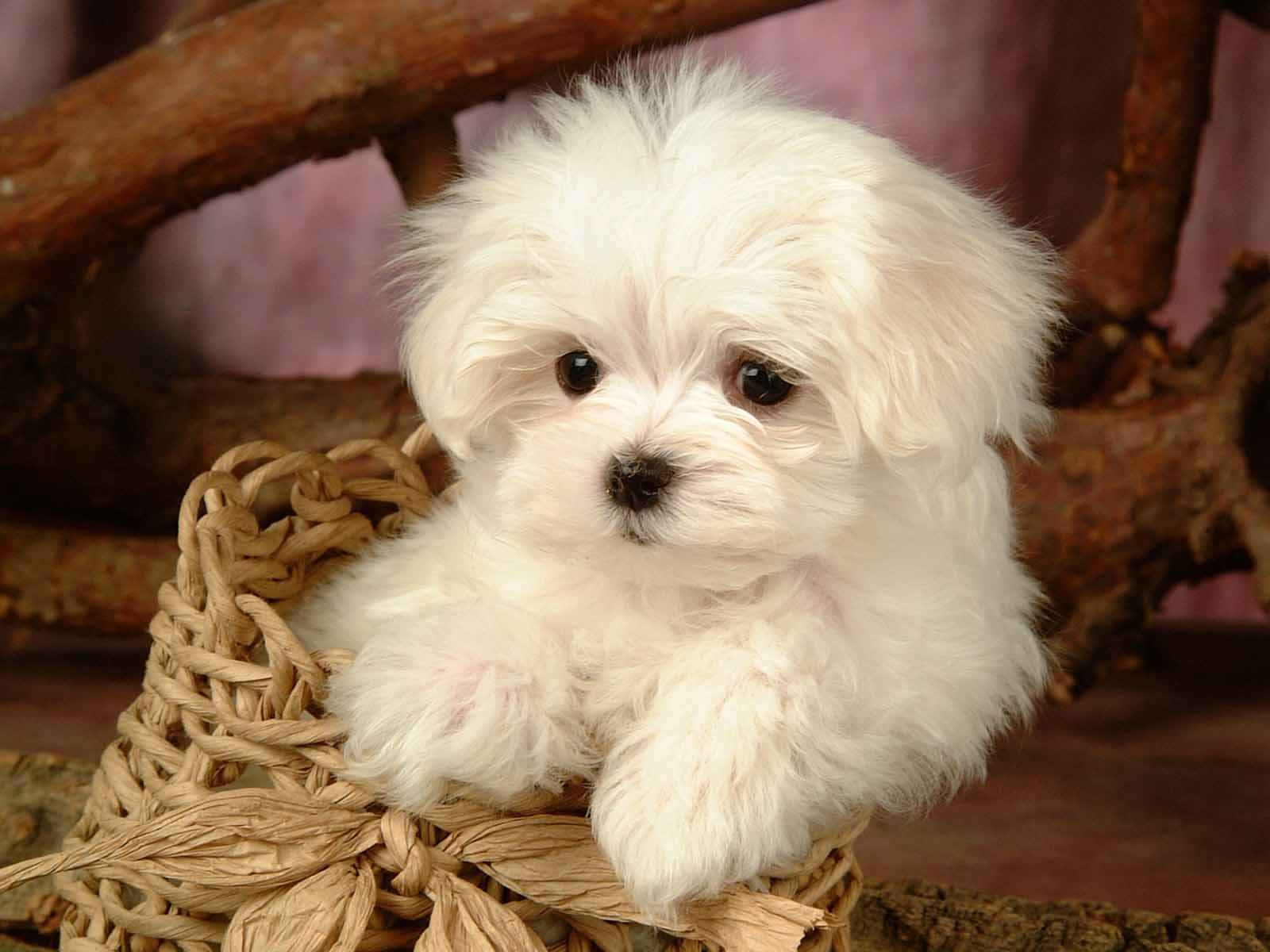 Sleeping Cute Puppy Wallpapers Pictures 1600x1200