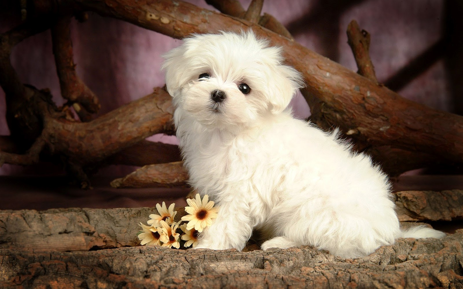 Download Free Cute Puppy Wallpapers For Your Mobile Phone By 1600x1000