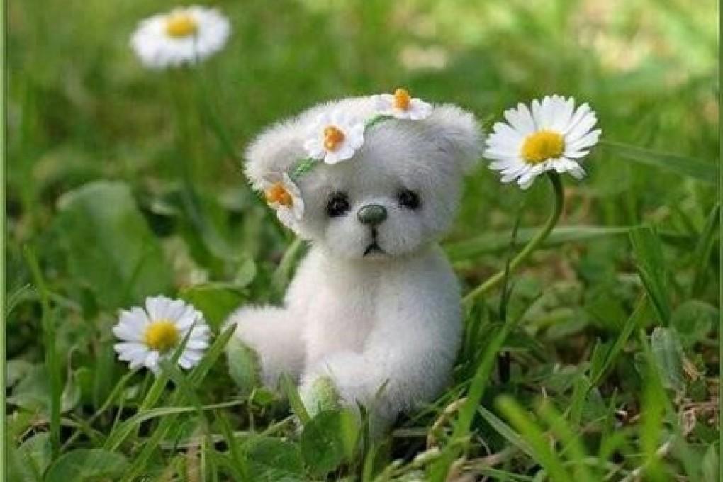 cute puppy wallpapers cute puppy free desktop backgrounds 1020x680