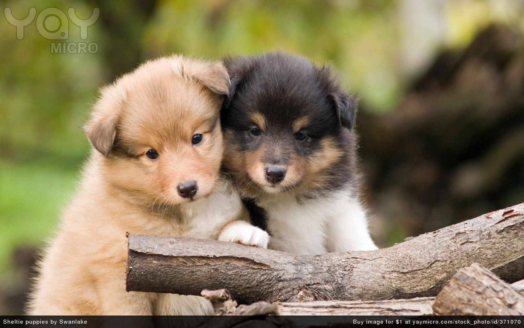 Cute Dogs And Puppies Wallpaper Cute Dogs And Puppies Backgrounds On