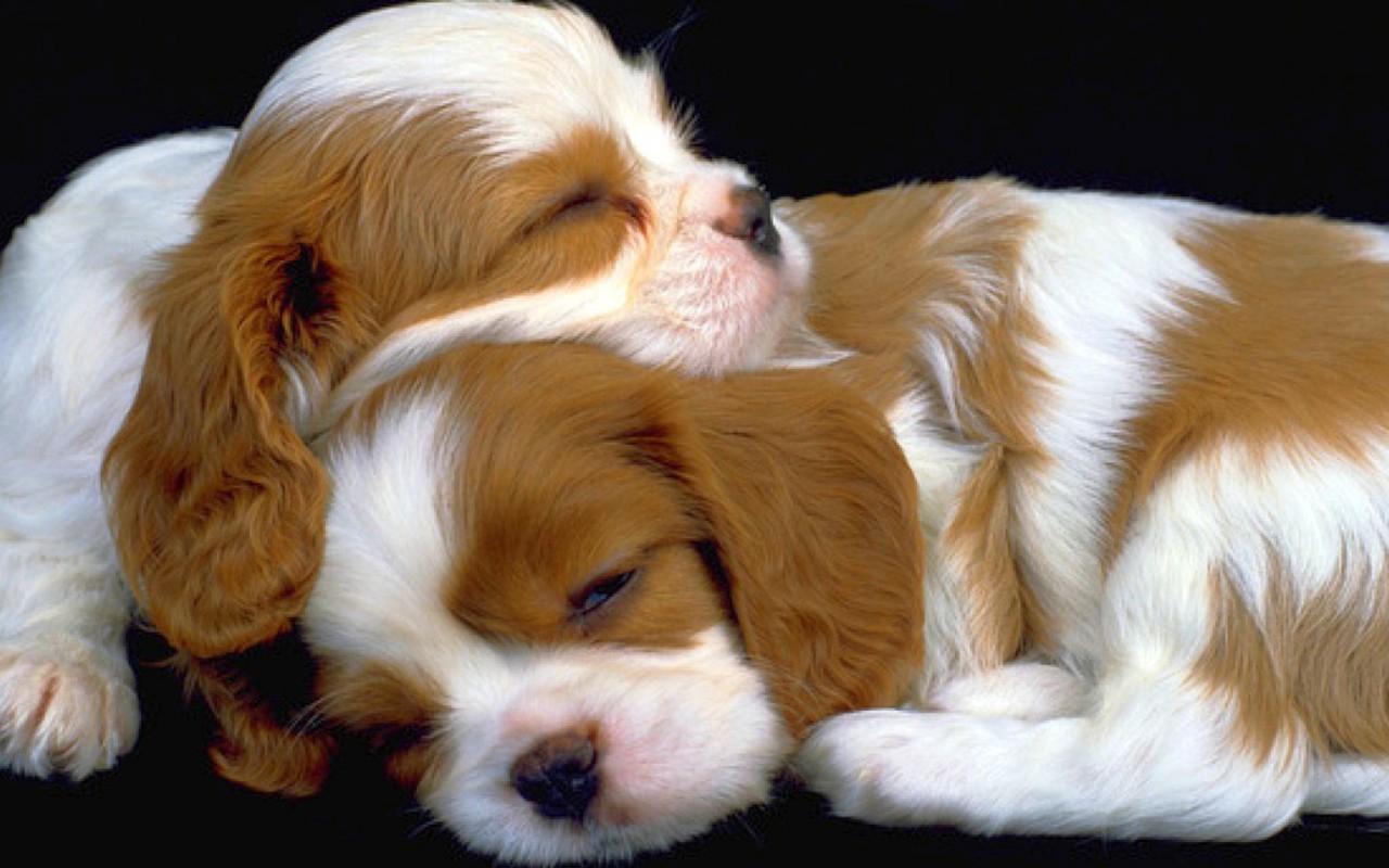 cute puppy wallpaper free litle pups 1280x800