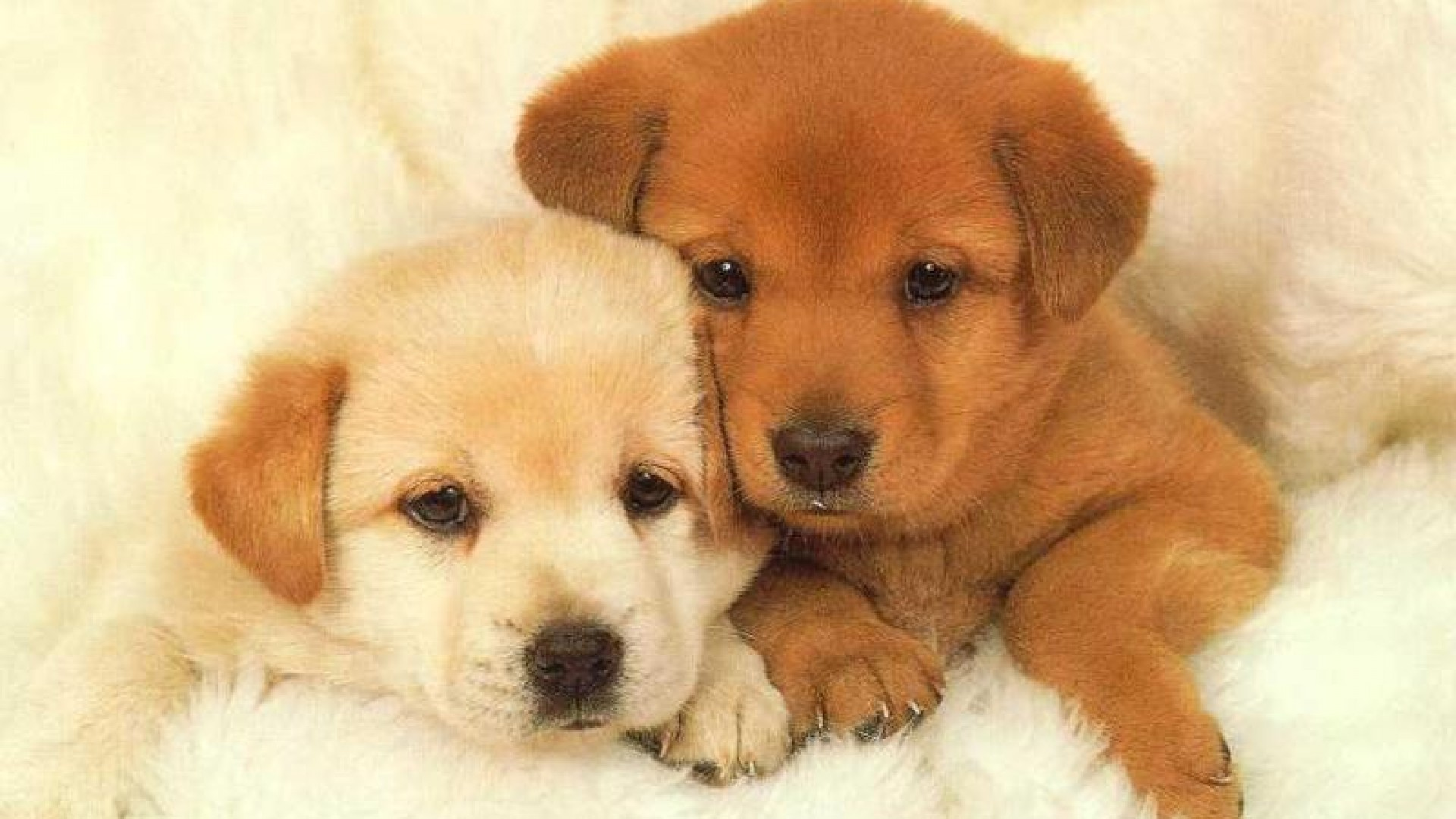 Cute Puppy Wallpaper Hd 1920x1080