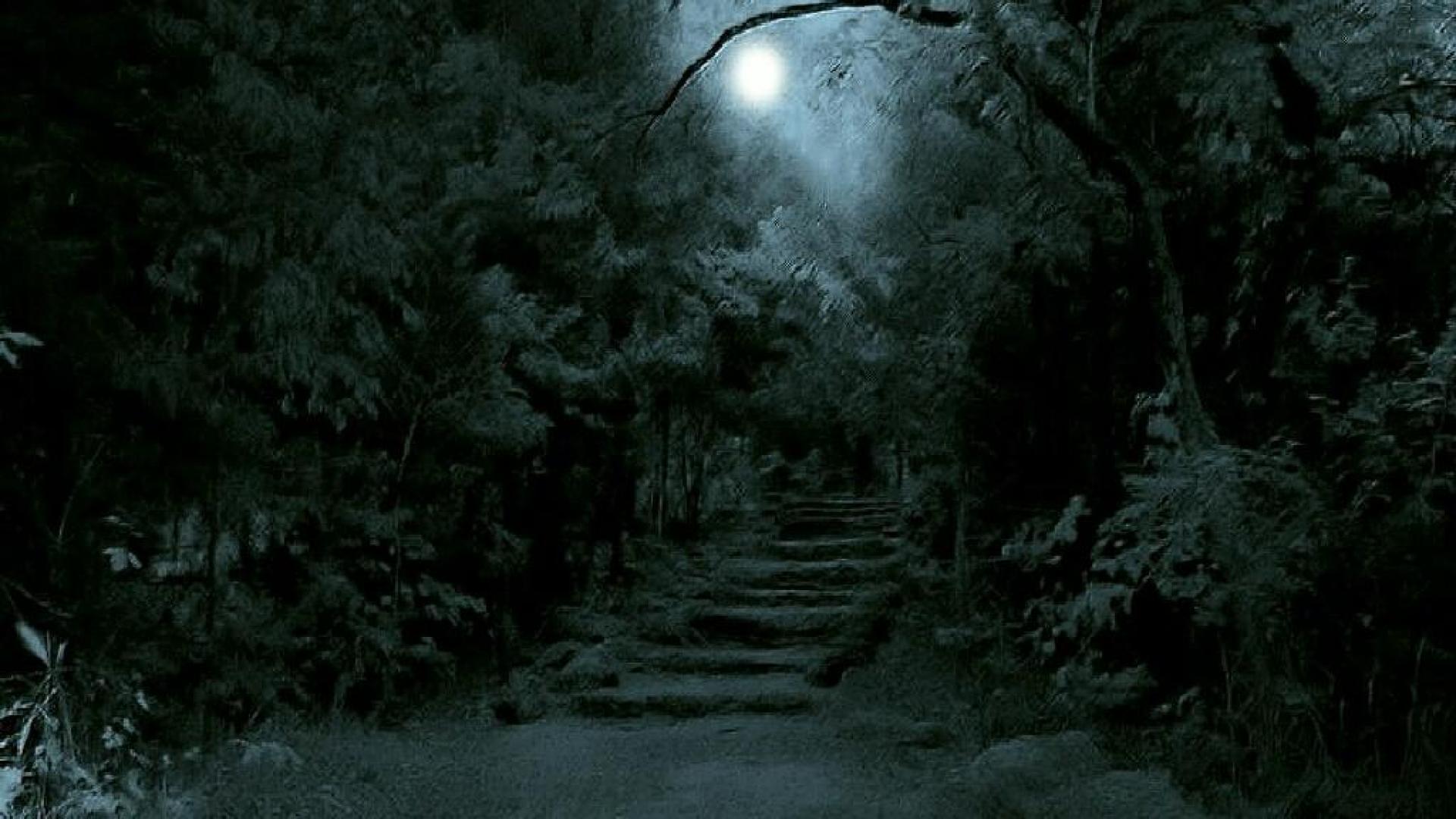 Dark Forest Wallpapers Wallpapersink High Resolution Dark